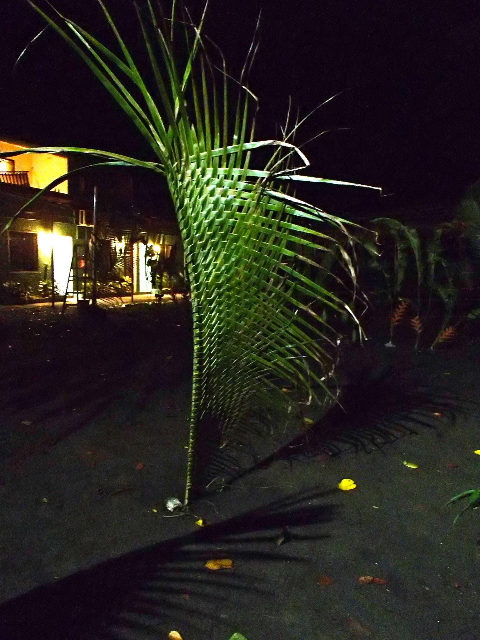 palme1
